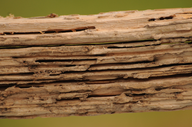 Prevent-Termite-Damage-in-Wood-Windows.jpg